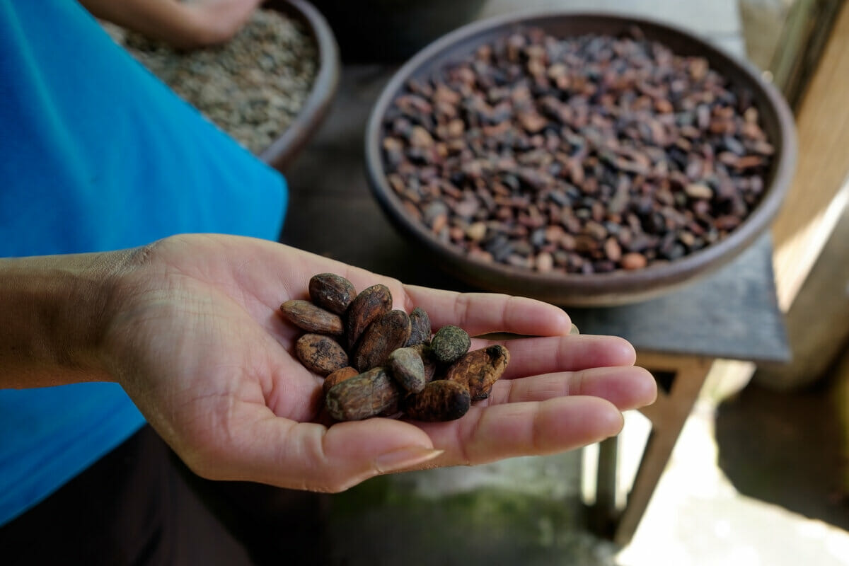 Woman holding cocoa beans in hands for chocolate